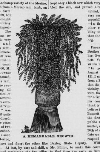Haun Tree